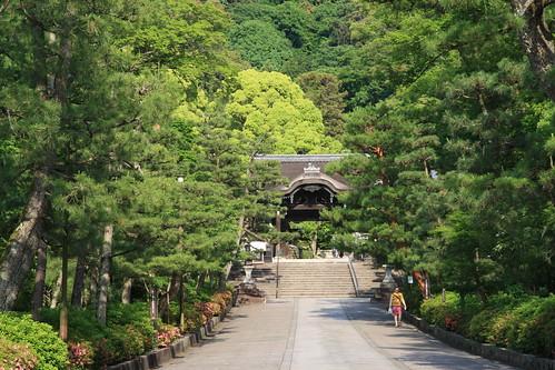 Maruyama Park, Kyoto 2016