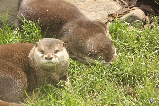 Besuch Zoo am Meer 26.06.201691