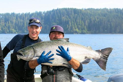 74 pound chinook salmon 2nd largest this season at langar for Langara fishing lodge