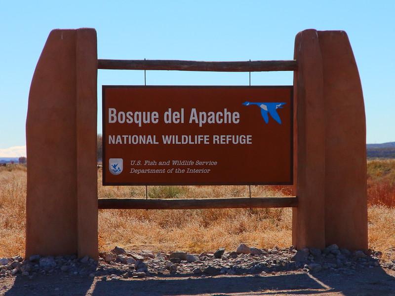 IMG_8191 Bosque del Apache National Wildlife Refuge