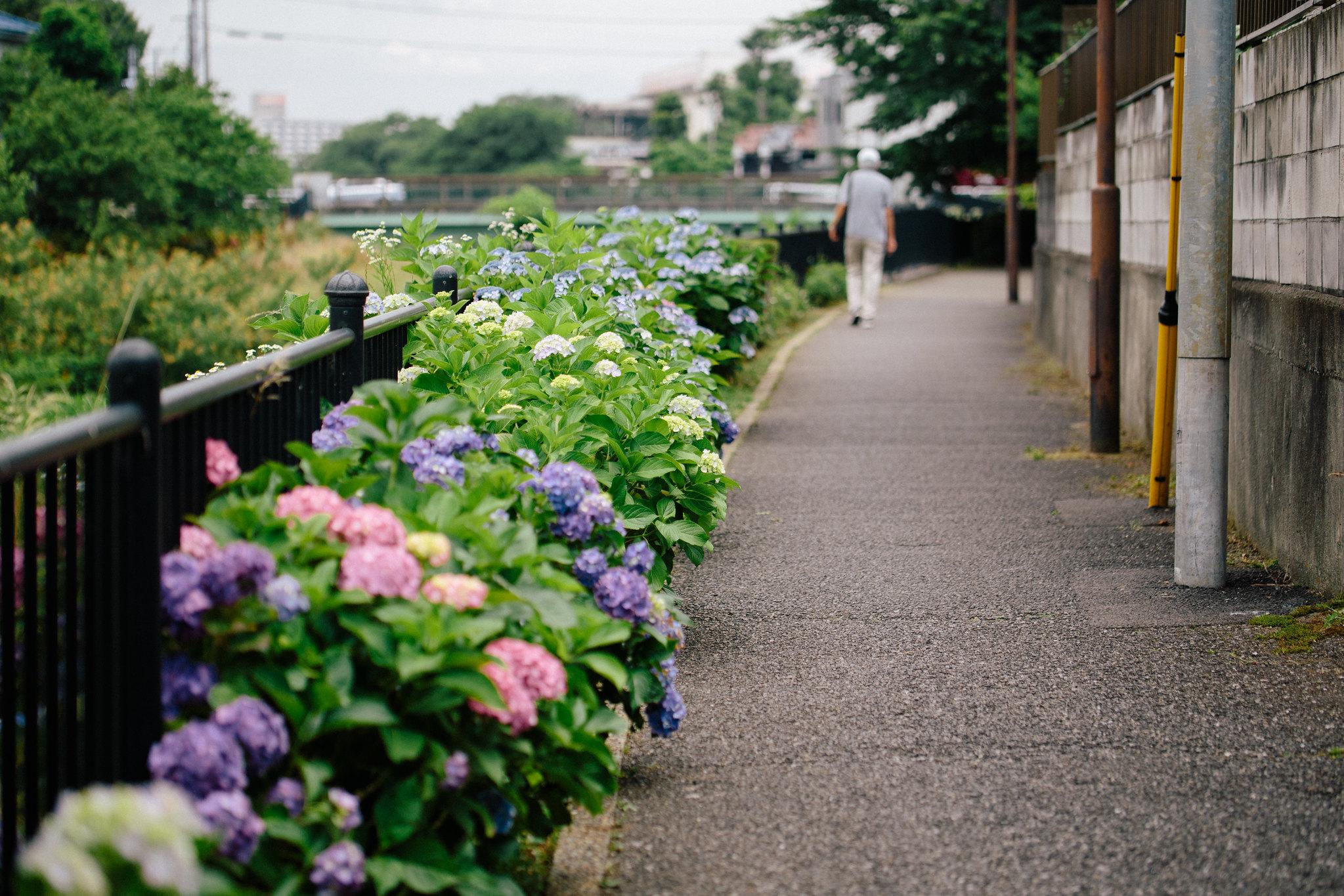 2016-06-08 昼散歩 001-15