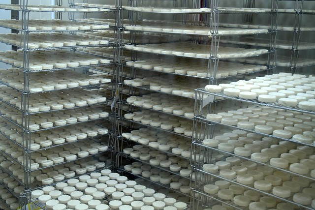 Rocomadour Goats Cheese in the Dordogne Valley | www.rachelphipps.com @rachelphipps