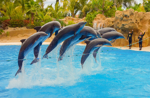 Dolphins jump | by Hilts uk