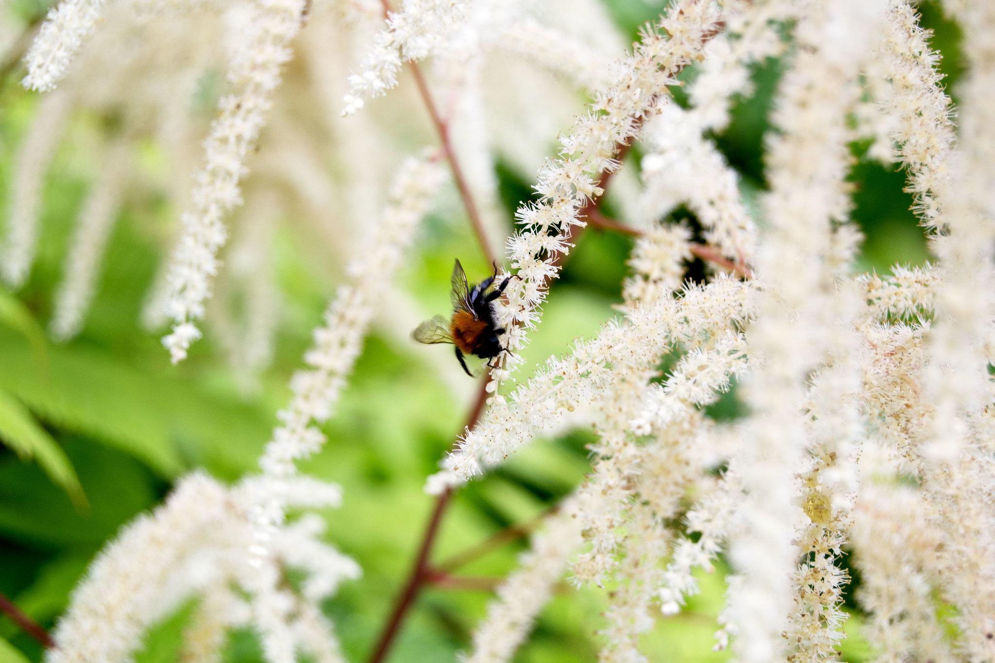 flowerbumblebee1
