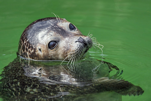 how to create a seal in water