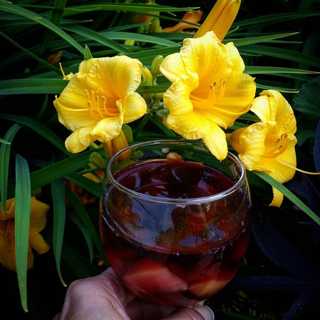 Toasting The Stella Doro Day Lilies With Sangria Sangri Flickr
