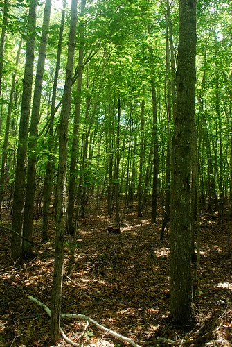 Big And Little Marsh State Natural Area