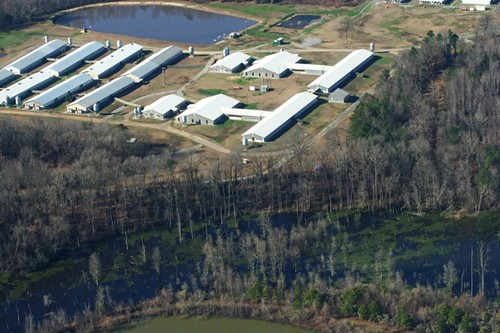 Swine Facility on Banks of NC River | by Waterkeeper Alliance Inc.