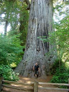 079 Big Tree