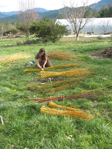 Making willow baskets | by White Oak Farm & Education Center