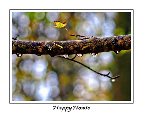 raindrops | by happyhowiephotography