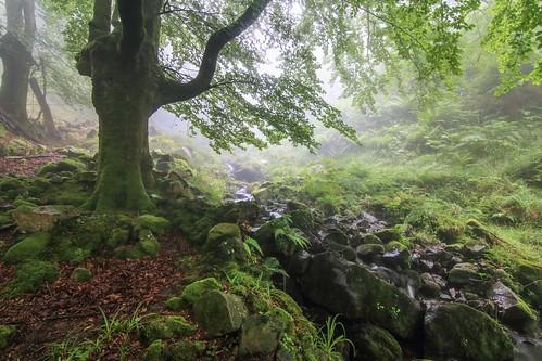 Parque Natural de #Gorbeia #Orozko #DePaseoConLarri #Flickr - -624