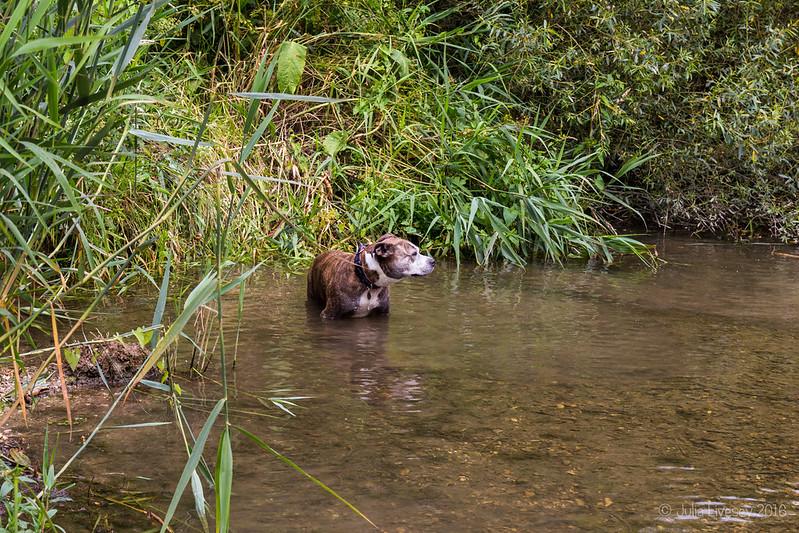 Jez in the river