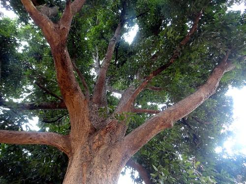 अंधविश्वास के चक्कर में बर्बाद होते गुणकारी पेड़