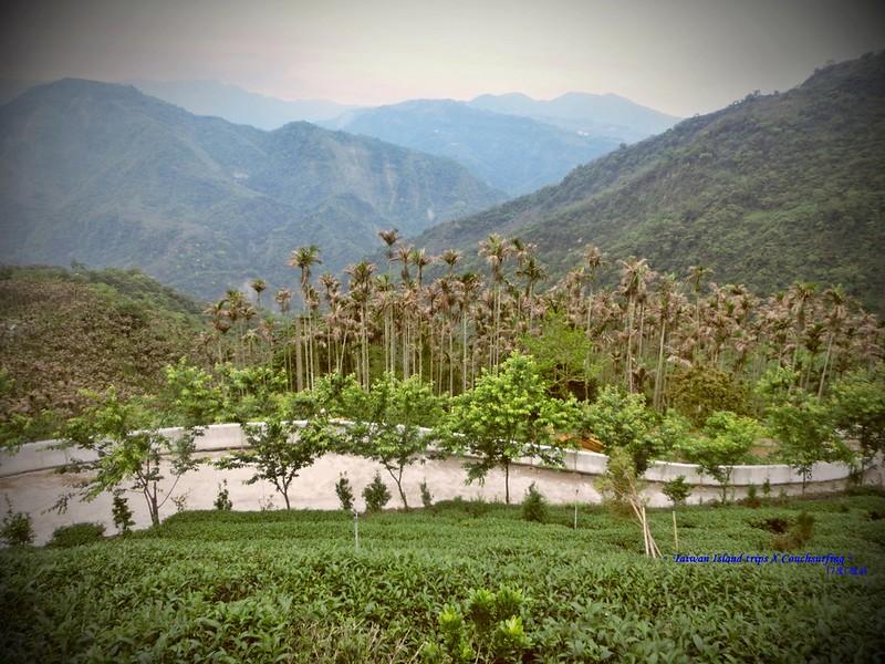 Taiwan Island trips X Couchsurfing。嘉151鄉道隨拍。太平36灣 (17)