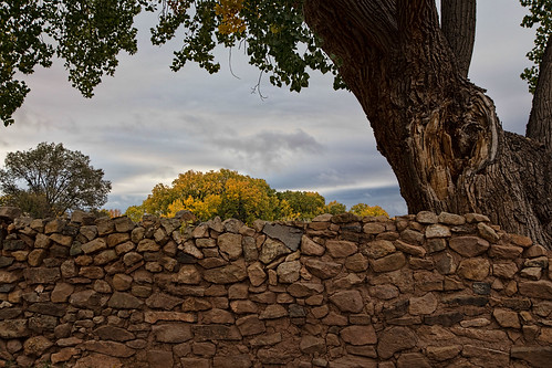 Stone Wall with Cottonwood | by P M Littman