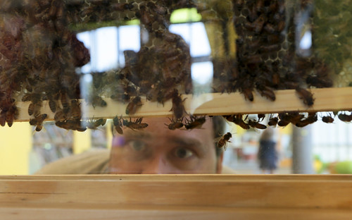 Bee Hive Indoor Observation Installation