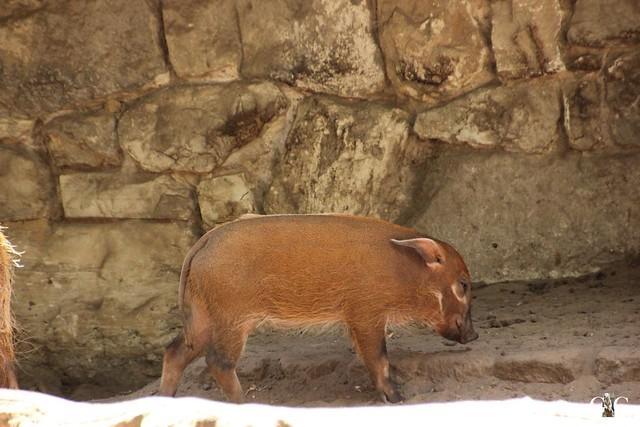 Sonntags-Besuch Zoo Berlin 03.07.201656