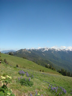 042 Hurricane Ridge