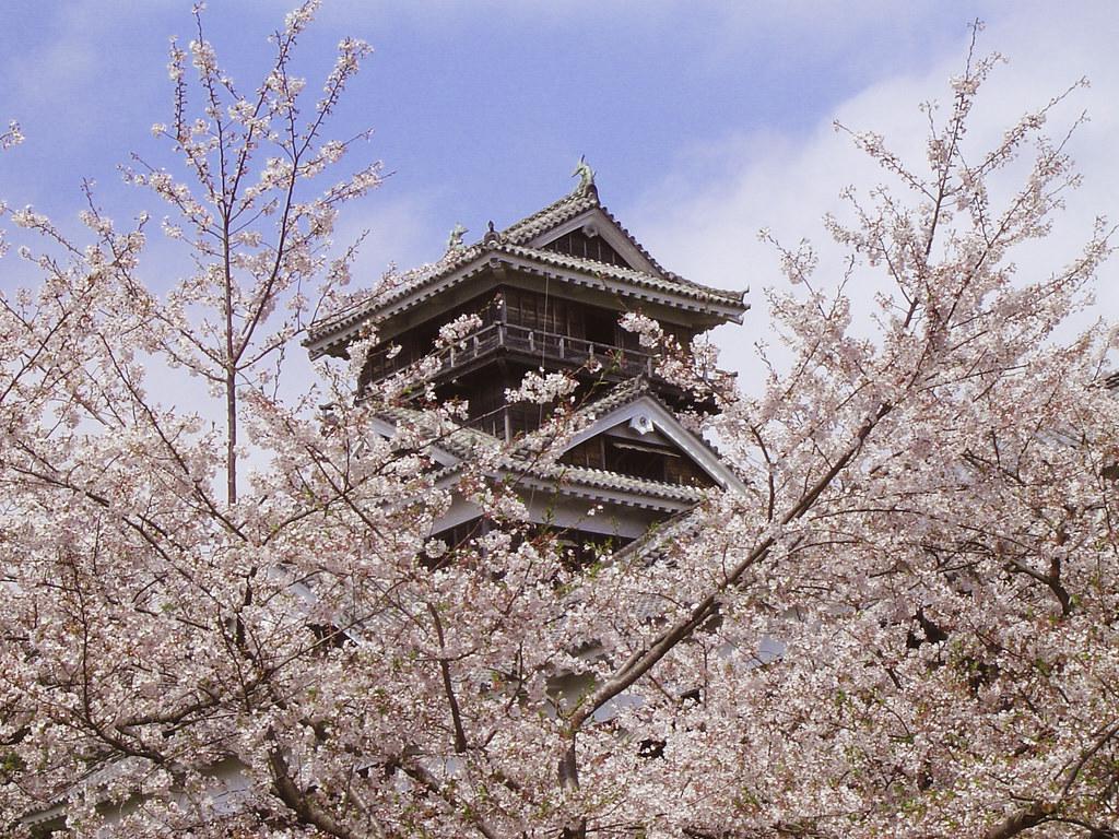 Image result for kumamoto castle sakura