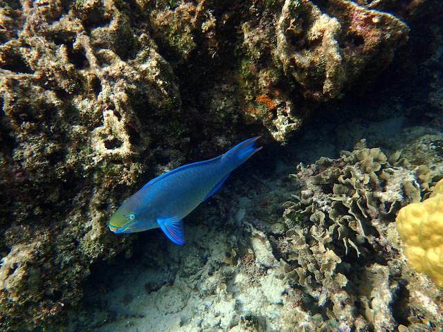 Roatan, Honduras West Bay snorkeling