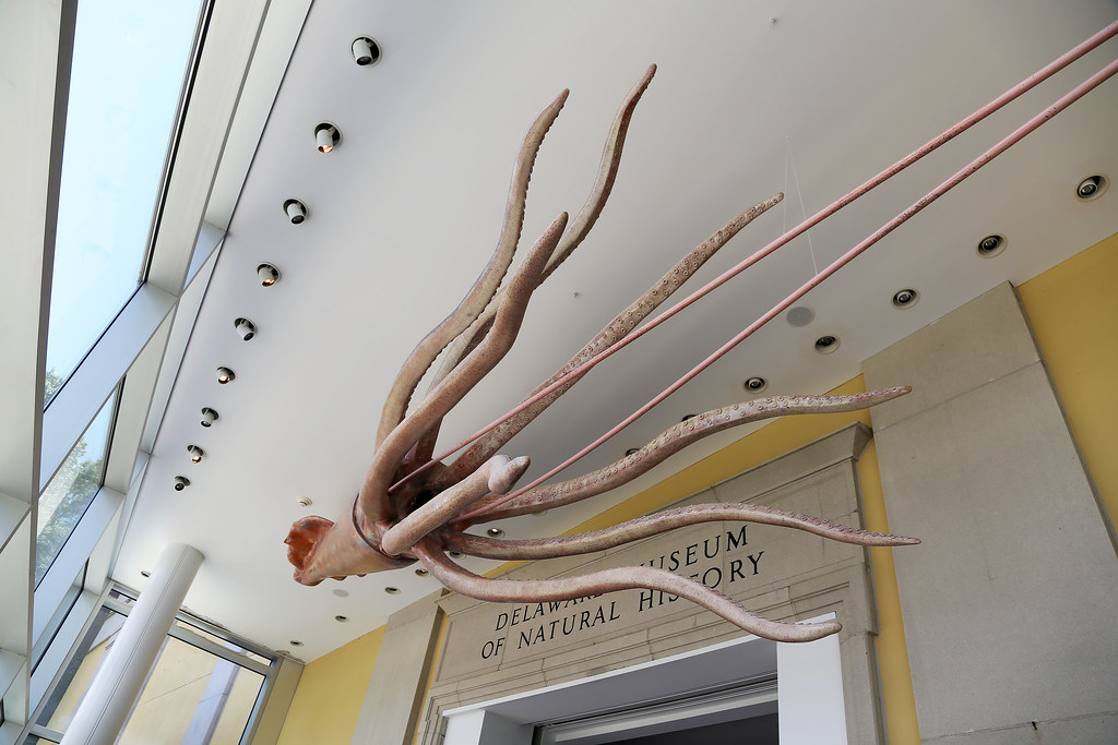 Image result for giant squid lobby delaware museum natural history