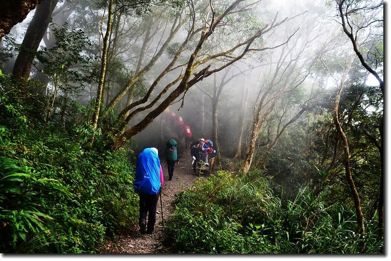 北大武山登山步道 4