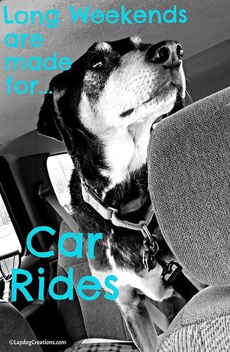 Teutul says, Long Weekends are made for Car Rides #houndmix #rescuedog #seniordog #LapdogCreations ©LapdogCreations