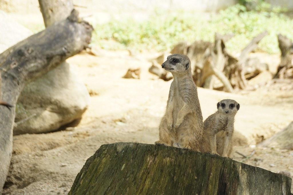 Zoo Linz Franz Lemler Flickr