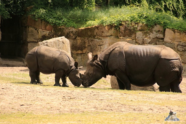 Tierpark Berlin 29.05.2016   0115