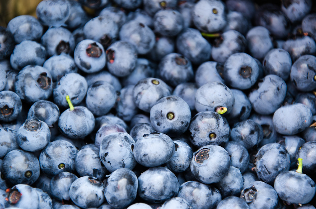 Should Cats Eat Blueberries