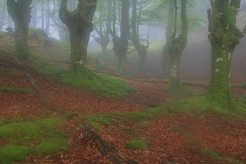 Parque Natural de #Gorbeia #Orozko #DePaseoConLarri #Flickr - -499