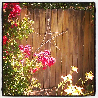 My son made this pretty star for me out of spent, dry daylily flower stalks. I love it! | by SarabellaE / Sara / Love in the Suburbs