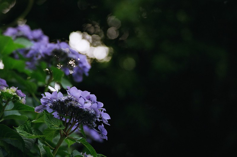 Nikon FM2で撮影 日暮里・谷中 2016年6月5日