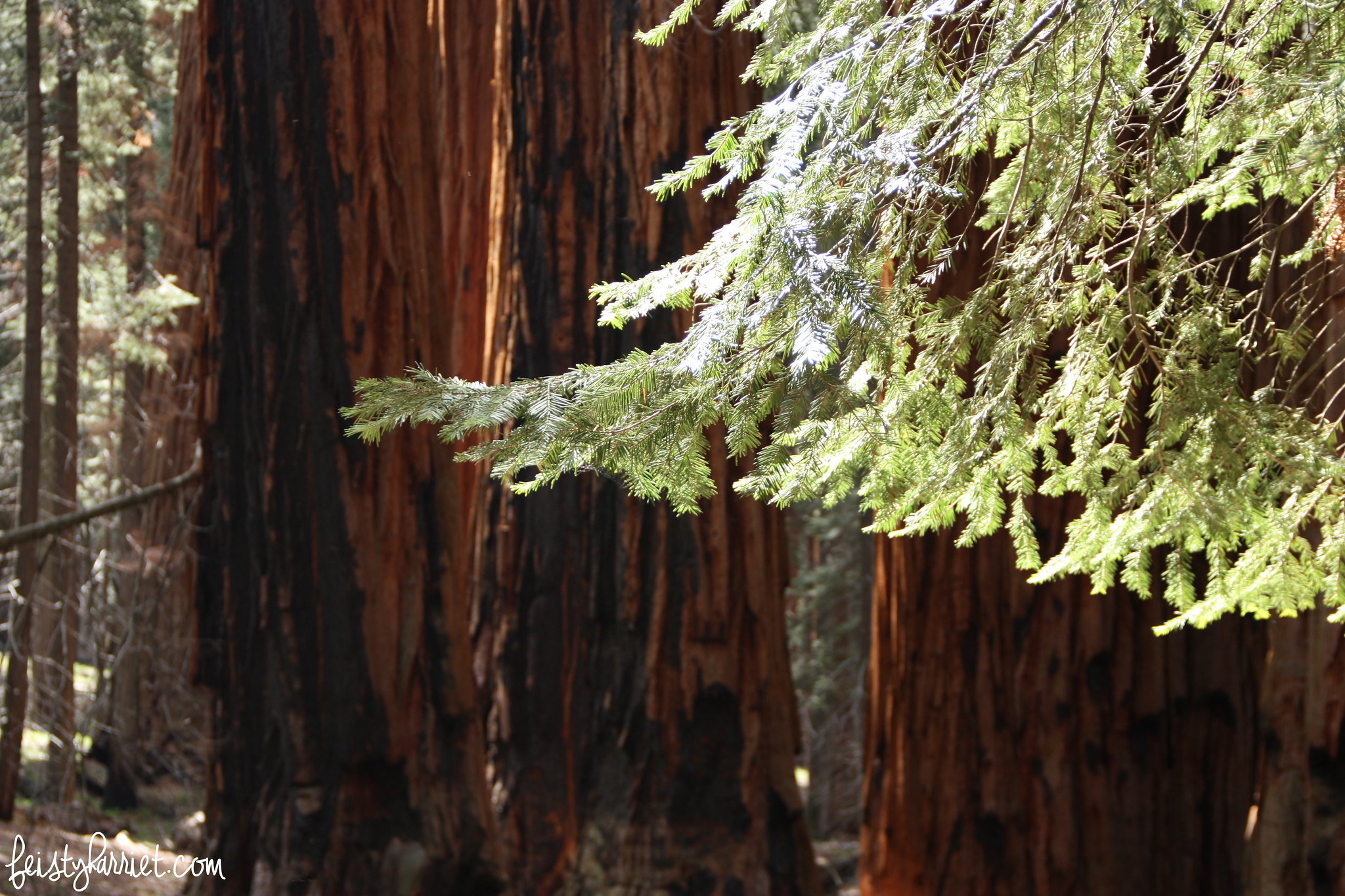 Sequoia National Park_feistyharriet_May 2016 (6)
