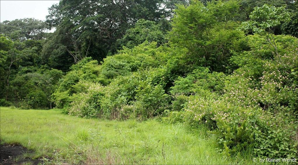 Bush Plant Forest