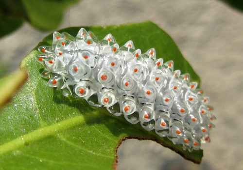 Jewel Caterpillar | by OurBreathingPlanet