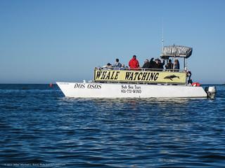 Whale Watching Virginia Beach Va