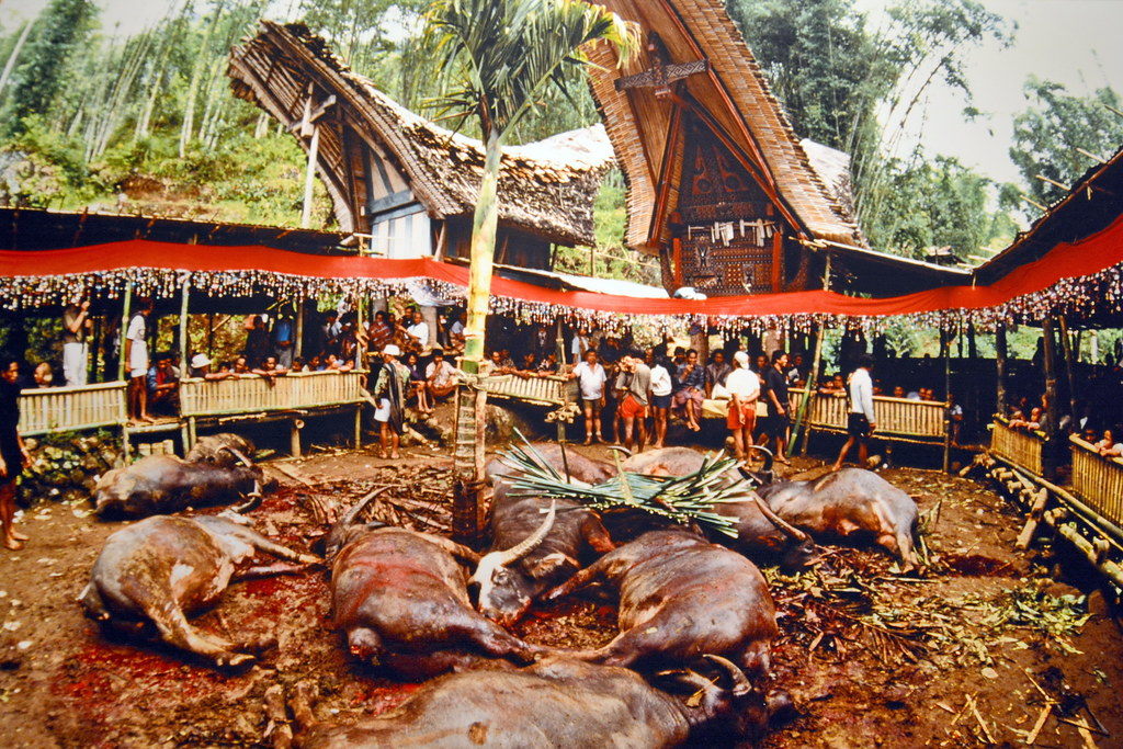 Indonesia Sulawesi Tanah Toraja Funeral Ceremony S Flickr