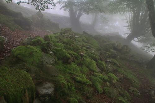 Parque Natural de #Gorbeia #Orozko #DePaseoConLarri #Flickr - -639