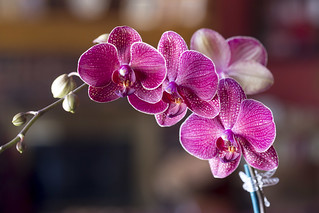 02-14 orchid-0412-17 | by jewelsofkent