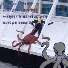 Octopus and Diver meme