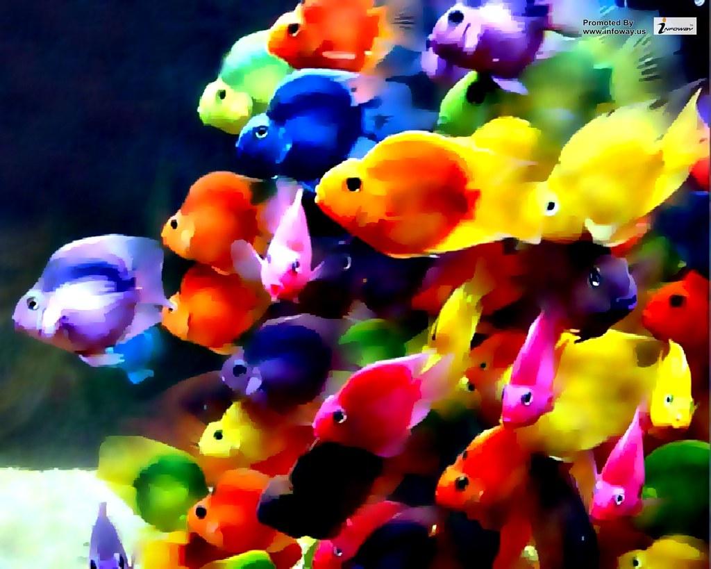 Beautiful colorful fish ocean wallpaper | Beautiful colorful… | Flickr
