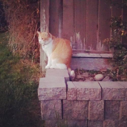 Neighbor S Cat On My Porch