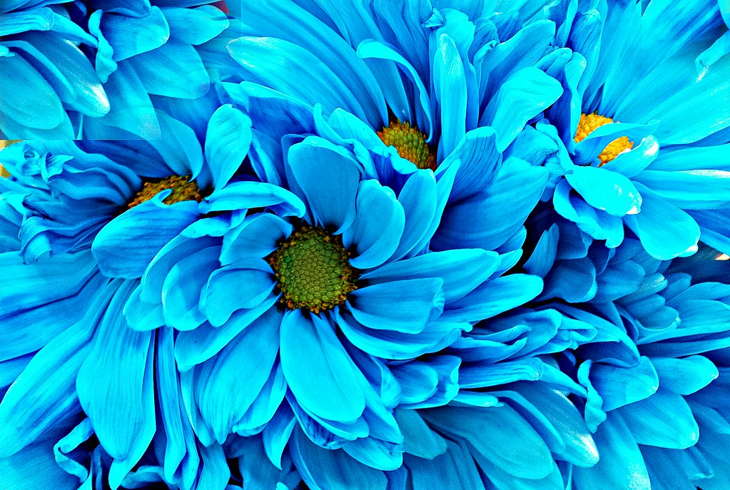Pretty Blue Flowers Taken At One Of My Favorite Free Prop Flickr