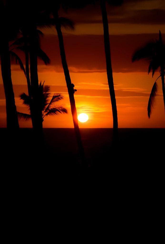 MJohnstonPhotography IOS 7 Maui Beach Palm Tree Sunset Parallax Wallpaper