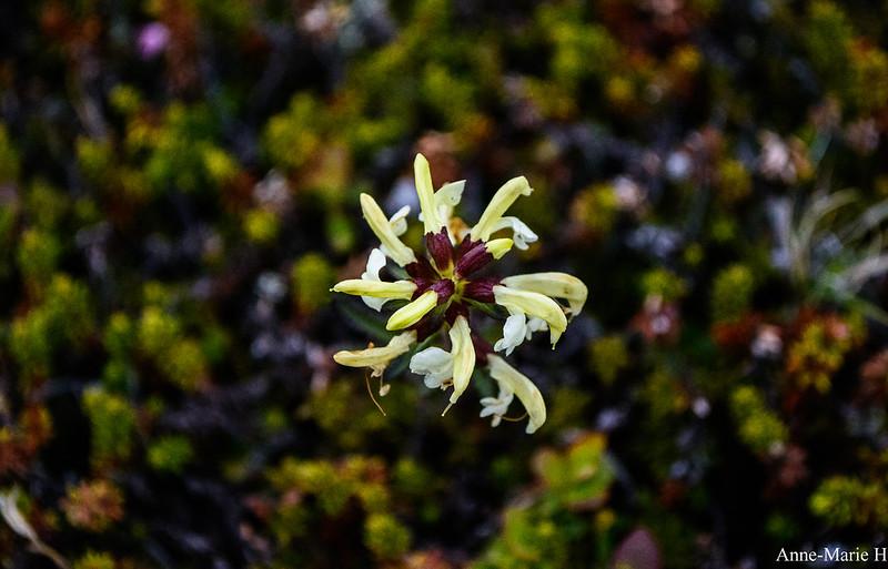 kukka4