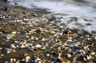 Seashells on the seashore | by gideonc - Thank you for the 1,000,000+ views