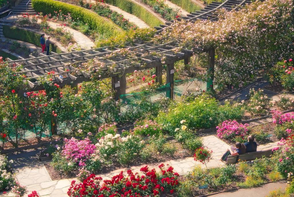 berkeley rose garden by dh parks - Berkeley Rose Garden