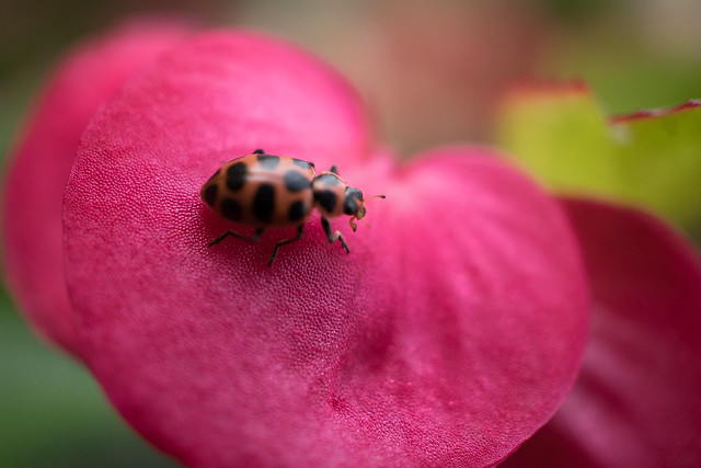 My First Macro Shot with a Bug! Sony 30mm F3.5 E mount